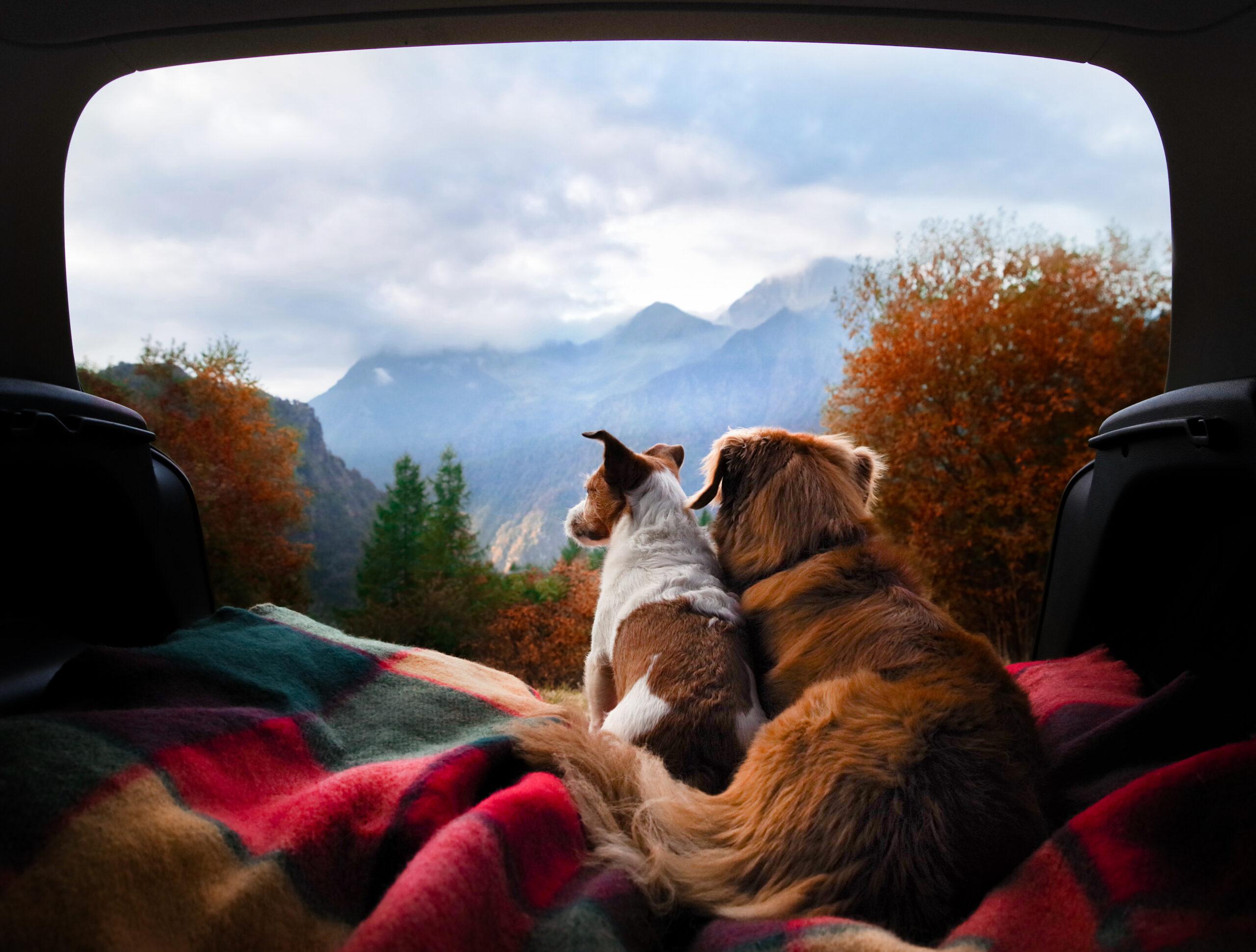 Kamperen met een Hond – 4 Handige Tips