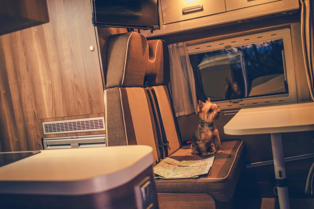 dog sitting in an RV